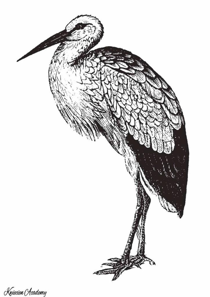 kolorowanka ptaki