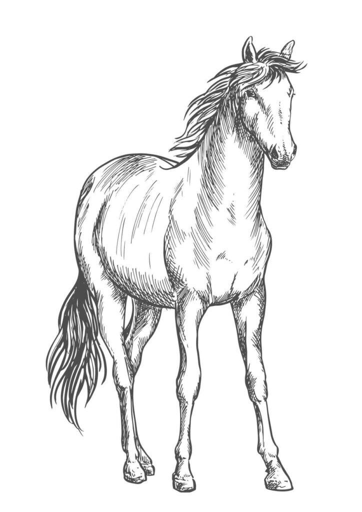 kolorowanki koni